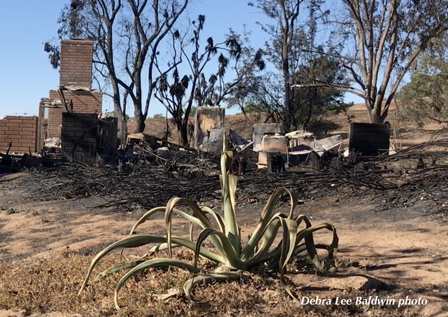 How Succulents Protected a Home from Wildfire